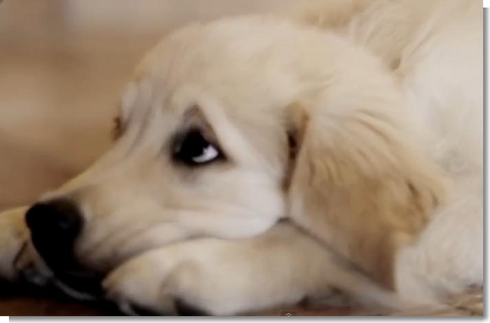 L'abbandono di un cane FERRAFILM - YouTube