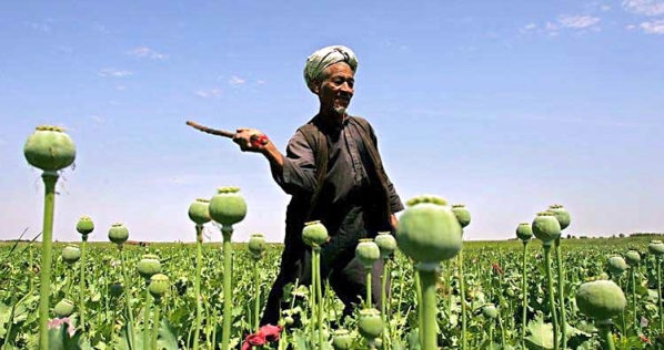 opium-production11